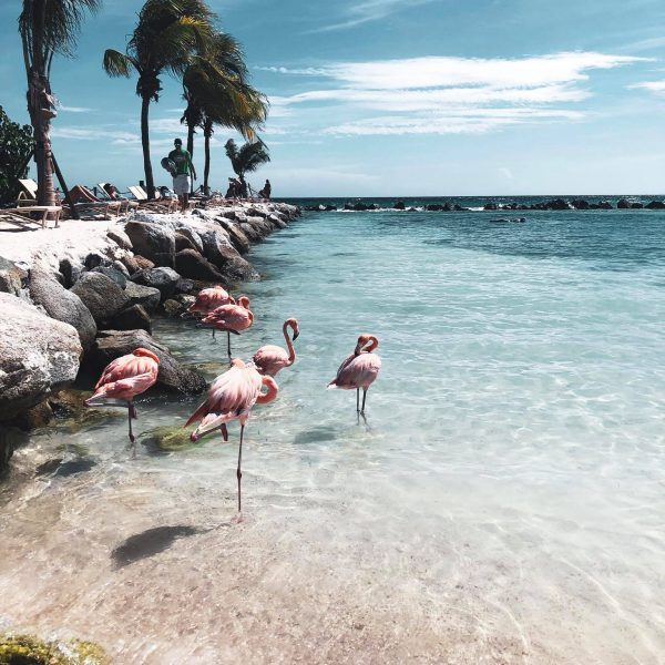 Aruba low cost
